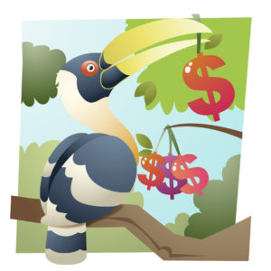 toucan with money